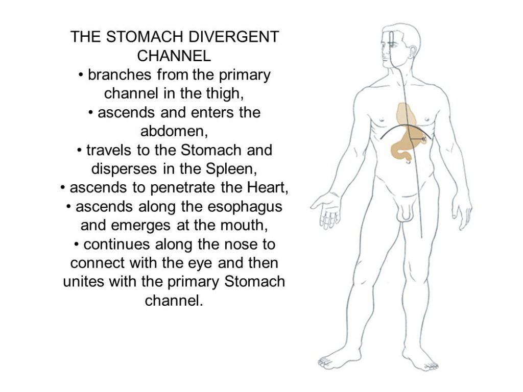 • branches from the primary channel in the thigh, • ascends and enters the abdomen, • travels to the Stomach and disperses in the Spleen, • ascends to penetrate the Heart, • ascends along the esophagus and emerges at the mouth, • continues along the nose to connect with the eye and then unites with the primary Stomach channel.
