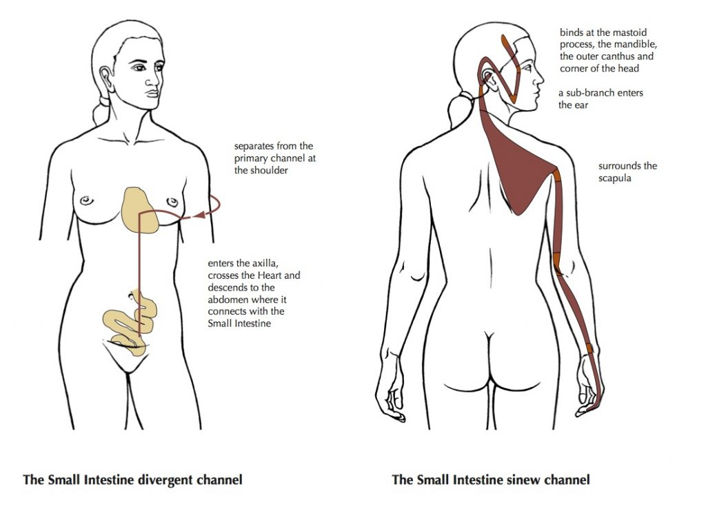 Unbinding the Chest: Soothing Emotionally Induced Shoulder